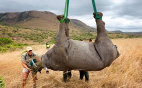 rhinos face extinction by 2020 wildlife experts warn al jazeera