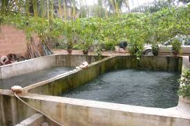 backyard tilapia farming design and ideas of house