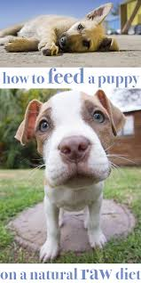 how to feed your puppy on natural raw food
