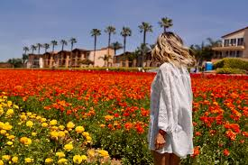 carlsbad flower garden my visit to carlsbad flower fields the code of style