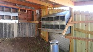 my big backyard chicken coop youtube