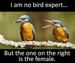 Meme Bird - no bird expert funny pictures quotes memes funny images