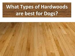 best hardwood flooring for dogs advice and house