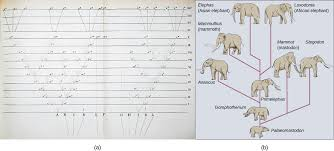 18 2 formation of new species biology libretexts
