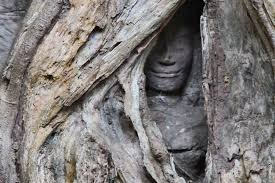 ta prohm temple an amazing spectacle visit angkor wat