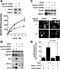 sequential cytoprotective responses to sigma1 ligand u2013induced