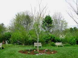 newest a tree grows in exeter celebrating n h u0027s newest arboretum new