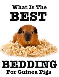 Best Bedding For Rats Best Bedding For Guinea Pigs Reviews And Tips For Making The