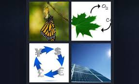 pics 1 word butterfly cocoon green leaf o2 co2 building money symbols