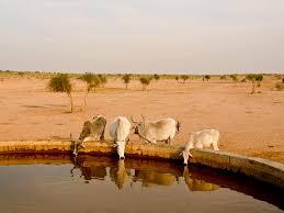 thar desert images of the great thar sc