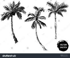 vector illustration palm tree sketch design stock vector 380740966