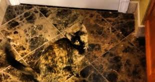 my cat matches perfectly my floor tile viral kittens