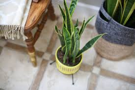 hello diy mid century planter u2013 lisa leonard designs blog