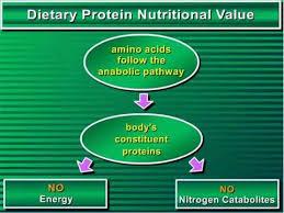 purium master amino acid pattern master amino acid pattern map presentation part 1