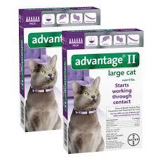advantage ii for cats cat flea treatment petsolutions