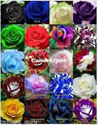 different color roses flower seeds 20 different colors free memory card reader