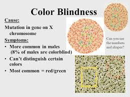 Human Color Blindness Chapter 12 Human Genetics Chromosomal Abnormalities 1 Infant In