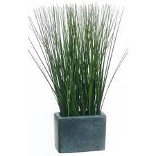 10 ornamental grasses for your landscape
