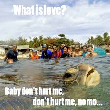Turtle Memes - beyond the turtle photo bomber and the memes adventures ni kulot