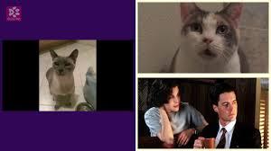 cats moewing twin peaks short excerpt incomplete version
