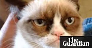 Grumpy Cat Has Died Youtube - the 10 best cats on the internet technology the guardian