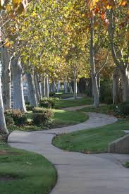 463 best tree walkways tunnels paths routes images on