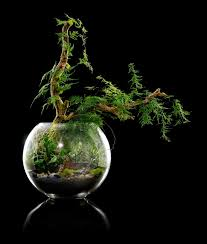 the 25 best large glass terrarium ideas on pinterest terrarium