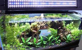 10 gallon planted tank led lighting aquarium lighting the aquarium setup filtration and maintenance site