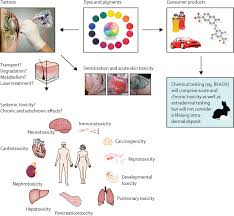 a medical toxicological view of tattooing the lancet