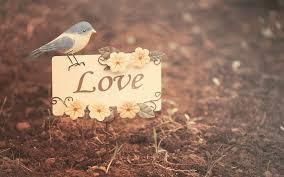 love card beautiful wallpaper hd free download