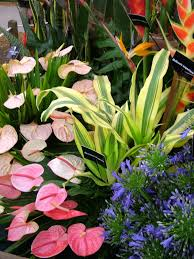 Tropical Flowers And Plants - tropical plants and flowers be sure to visit gardenanswers com