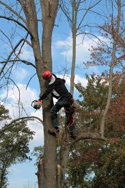 phillips tree service home