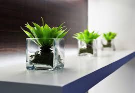 best plant for desk office desk plant rpisite com