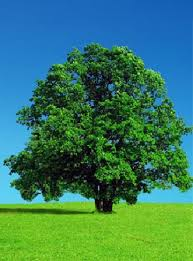 tree pictures hd wallpapers pulse