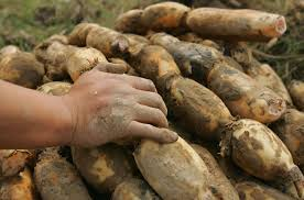 Spanish Root Vegetables - 5 unusual root vegetables you probably haven u0027t heard of national