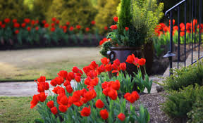 garden design garden design with naturalizing bulbs walnuts n