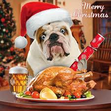 bulldog single xmas card 3 d goggly moving eyes dogs dinner