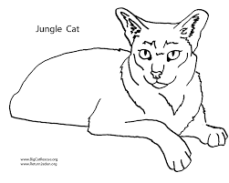 free wild cat coloring pages bebo pandco