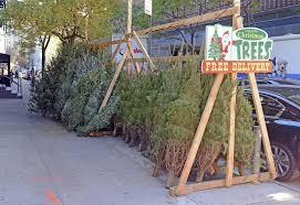 christmas trees nyc best cheapest vendors streeteasy