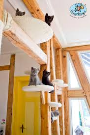 46 best kitten space images on pinterest cat furniture cats and