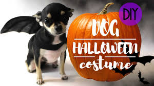 dog halloween easy costume diy youtube