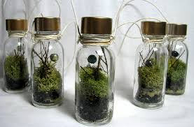 terrariums a simple nest