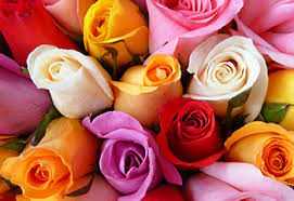 Multi Colored Roses What Is The Difference Between Spray Roses And Roses Proflowers