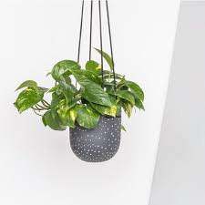 Black And White Planters by Stak Ceramics White On Black Dot Hanging Planters U2014 Stak Ceramics