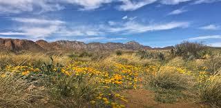 desert canyon floor plans palo verde homes
