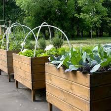 small garden ideas urban garden container growing