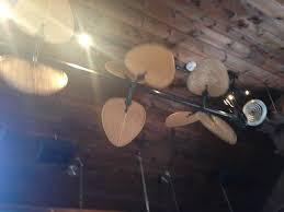 cool looking ceiling fans yelp
