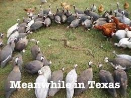Meanwhile In Texas Meme - 21 best meanwhile in texas images on pinterest funny stuff