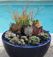 Succulent Gardens Ideas 70 Indoor And Outdoor Succulent Garden Ideas Shelterness With