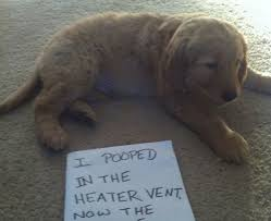 Naughty Funny Memes - 30 naughty dogs you ll lol at what they did imglulz